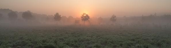Morgenstimmung mit Nebelschwaden am 19.05.2014